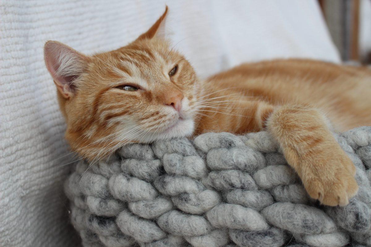 Design Katzenbetten; Design Katzenmöbel Design Katzenbett